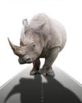Image - Gray Rhinos