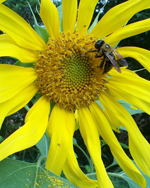 Image - Queen Bees of Citizen Science