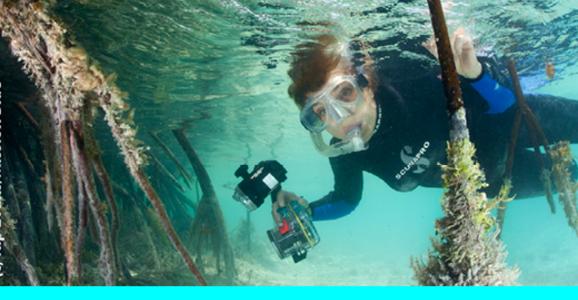 Dr. Sylvia Earle: One Big Ocean