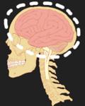 Image - Neuroscientist Daniel Levitin and the Organized Mind