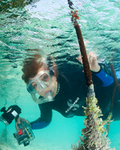 Image - Dr. Sylvia Earle: One Big Ocean
