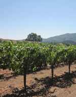 Image - Dry Farming Wine Grapes in California: Making Great Wine