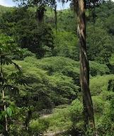 Image - Forest Wars