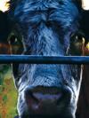 Image - Cowspiracy